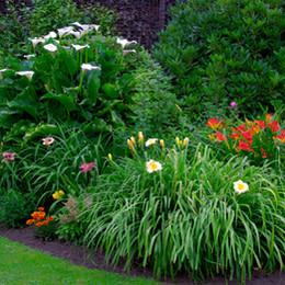 Beautiful Garden. Green Lawn in Landscap