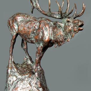 Old Man Elk II