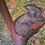 """Thumbnail: """"Koala""""-maalauspaketti"""