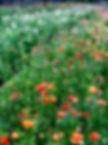 Carlos Floral IMG 2