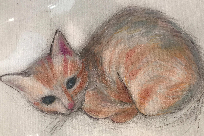 Orange Tabby in Pencil