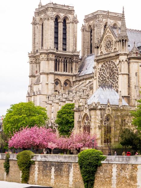 Notre Dame 2 - Willard.png