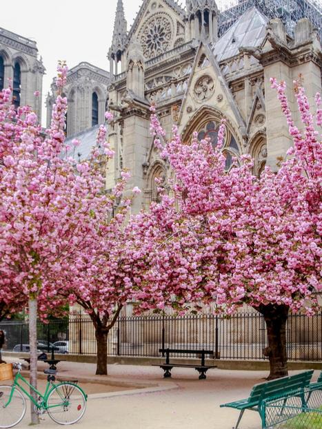 Notre Dame 4 - Willard.png