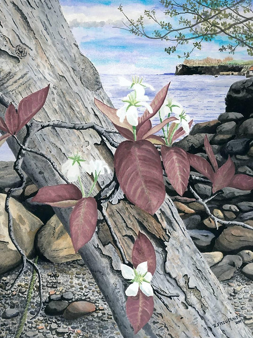 """""""Spring Bloom at the Beach"""" (2011) 15.5 X 19"""" Original Watercolour Paper Framed"""