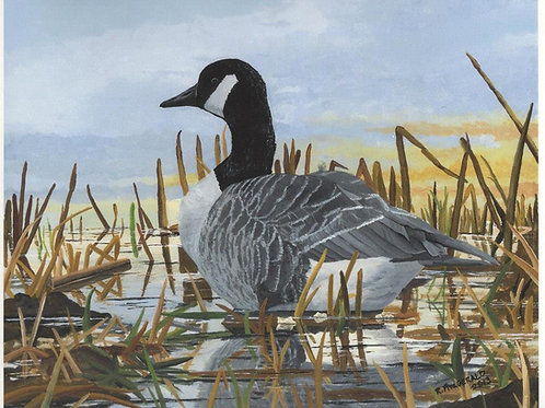 """Canada Goose"" 12X16 Fine Art Paper Print  Reilly Fitzgerald, Artist"