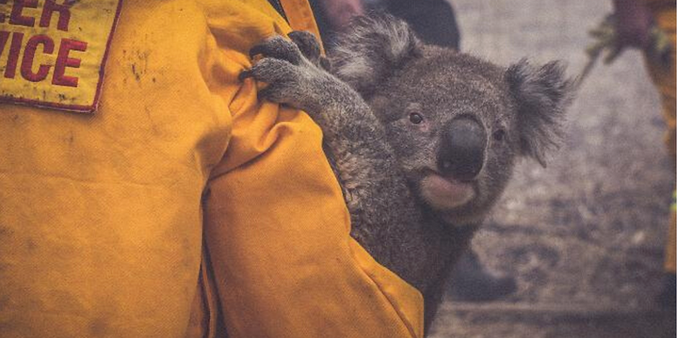 Australia Fires - Wildlife Fundraiser