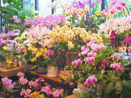 How to Refresh Your Store for Spring