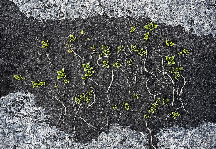 Spring Growth - Stokkness