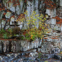 Rock Wall - Alvin Roussel.jpg