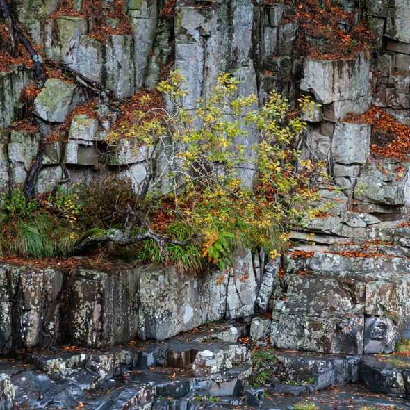 Rock Wall by Alvin Roussel