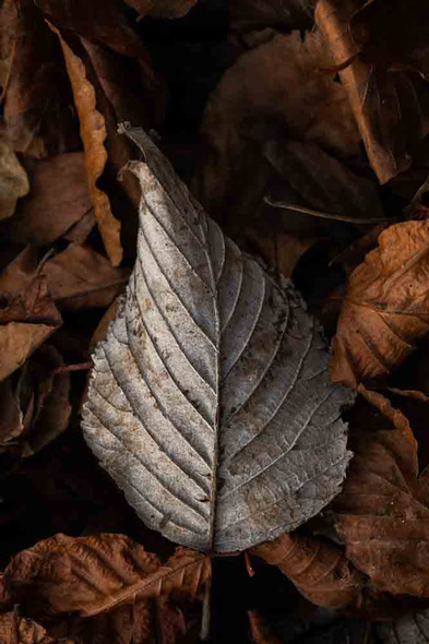 Leaf in the Forest by Chris Gregory