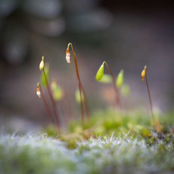 Tiny Jewels by Peter Cox