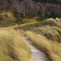 The path from the shore by David Ward