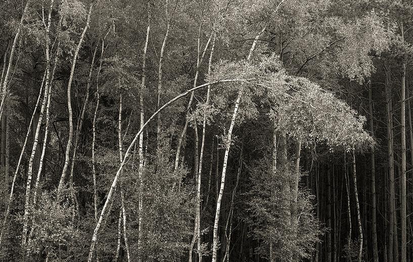 Birch Curve