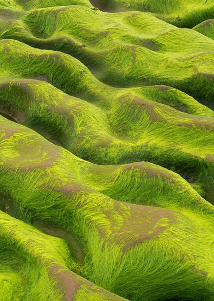 Green waves by David Ward