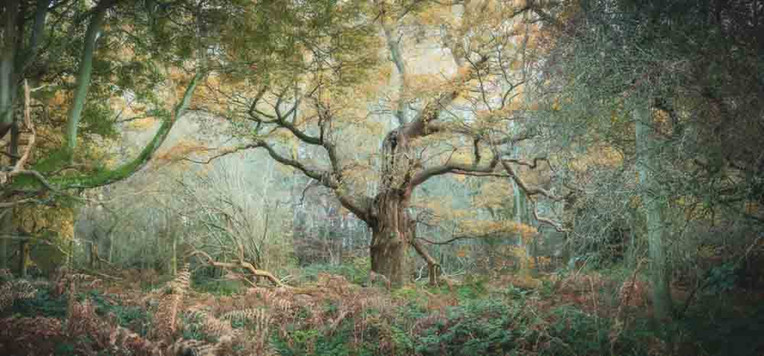 Guardian of the Wood by Simon Turnbull