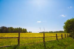 Rural Landscape Childers