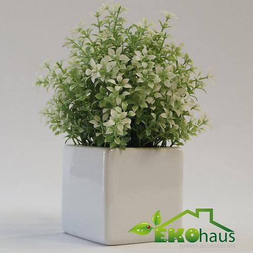 Mini Laurel blanco