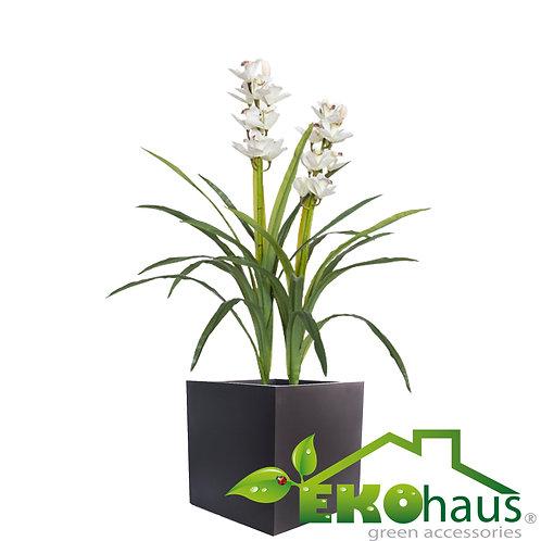 Orquídea con hoja