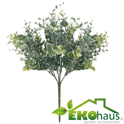 Mini eucalipto