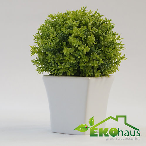 Mini serpol verde
