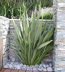 formios-para-decorar-jardines-plantas-fo