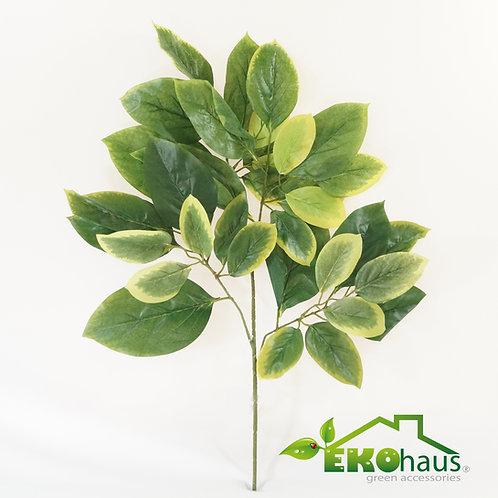 Qingdao verde