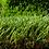 Thumbnail: EKO GRASS DELUX