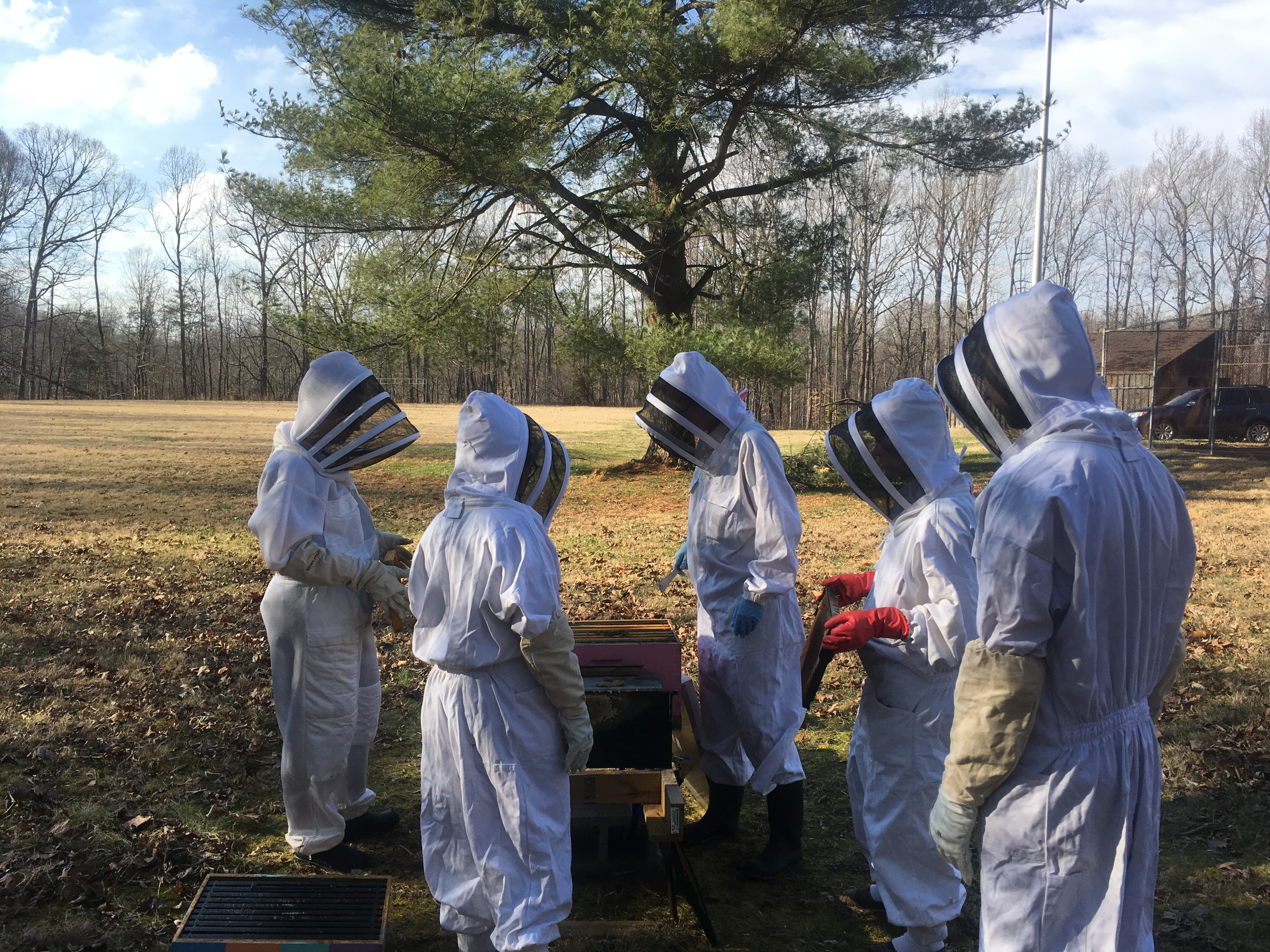 Bee keeping together
