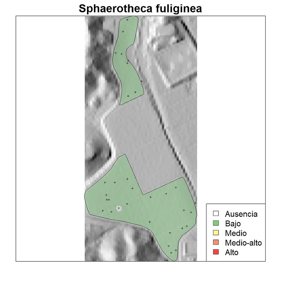 Se muestra la dispersión del patógeno Sphaerotheca fuliginea poco después del establecimiento del cultivo. El nivel del patógeno en toda la parcela es bajo.