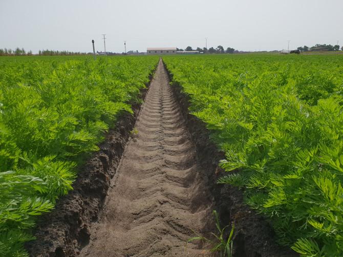 La empresa Agrícolas Villena se suma al ensayo de la plataforma VegAlert