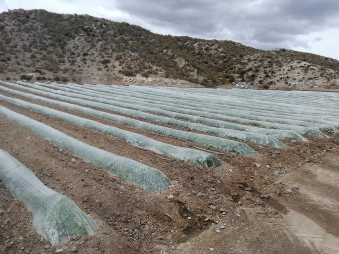 La plataforma VegAlert se prueba en cultivo de Melón
