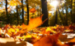 6932472-autumn-falling-leaves-ground s.j