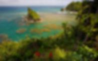 fabulous reef view in dominica.jpeg