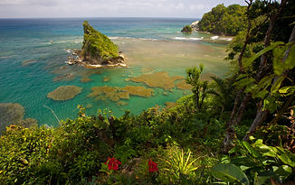 fabulous reef view in dominica.jpeg