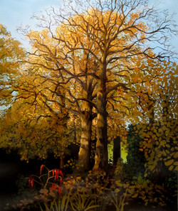 garden trees, November morning