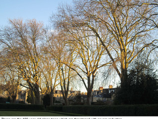 Decision on Alexandra Gardens Trees contested
