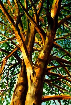 Trees-10-4-2012