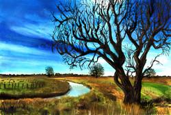 Cirrus tree