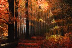 autumn wood2.jpg