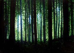 sun through trees (blue).jpg