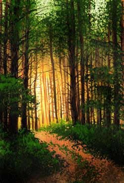 sun through pines.jpg