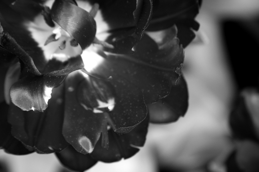 botanical 158_edited.jpg