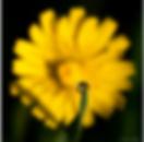Capture d'écran 2020-04-08 à 11.29.39.pn
