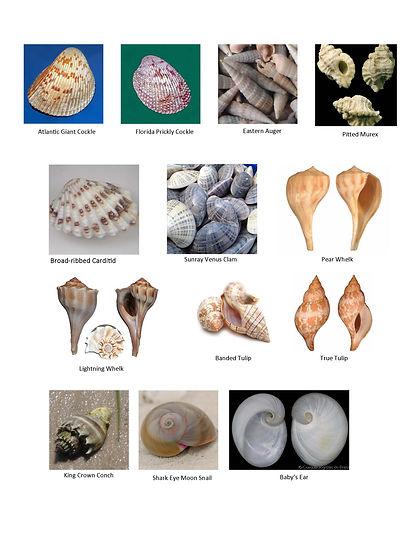Seashell Scavenger Hunt_Page_2.jpg