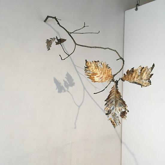 leaf & branch ミズナラ