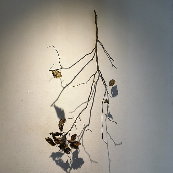 leaf & branch ブナ