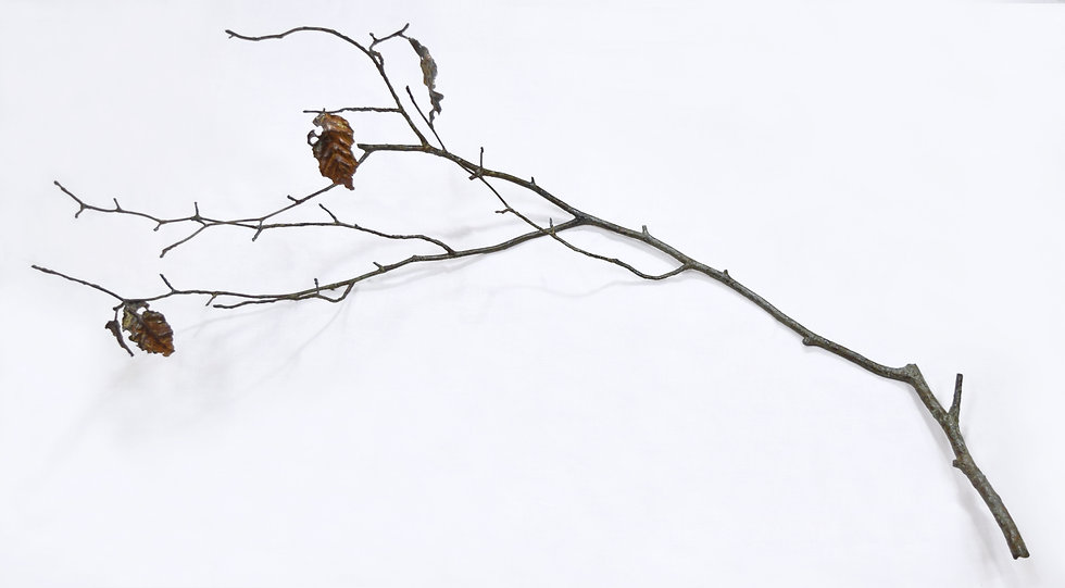 fallen leaves-corrosion- branch / 長坂絵夢