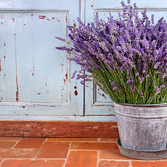 Lavender in old metal bucket 7288.jpeg