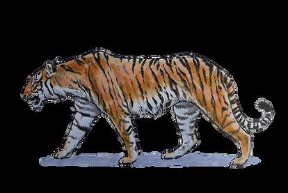 tiger.tif